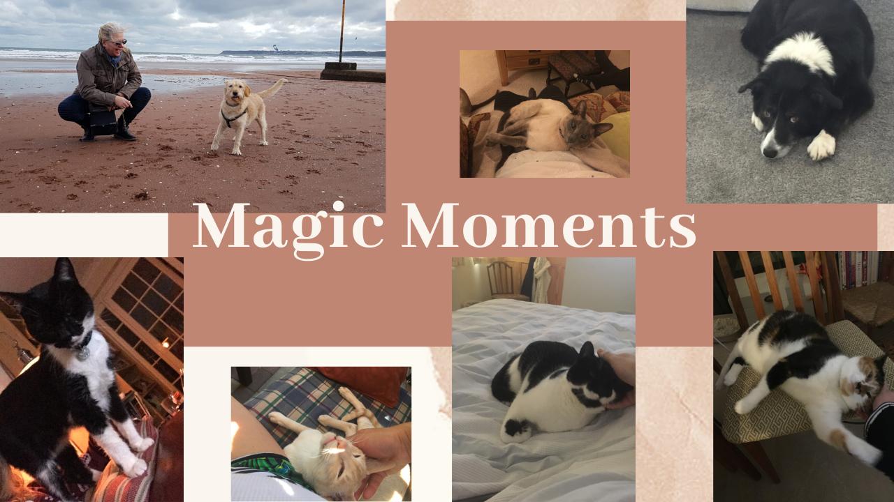 UK pet sitting experiences and photos