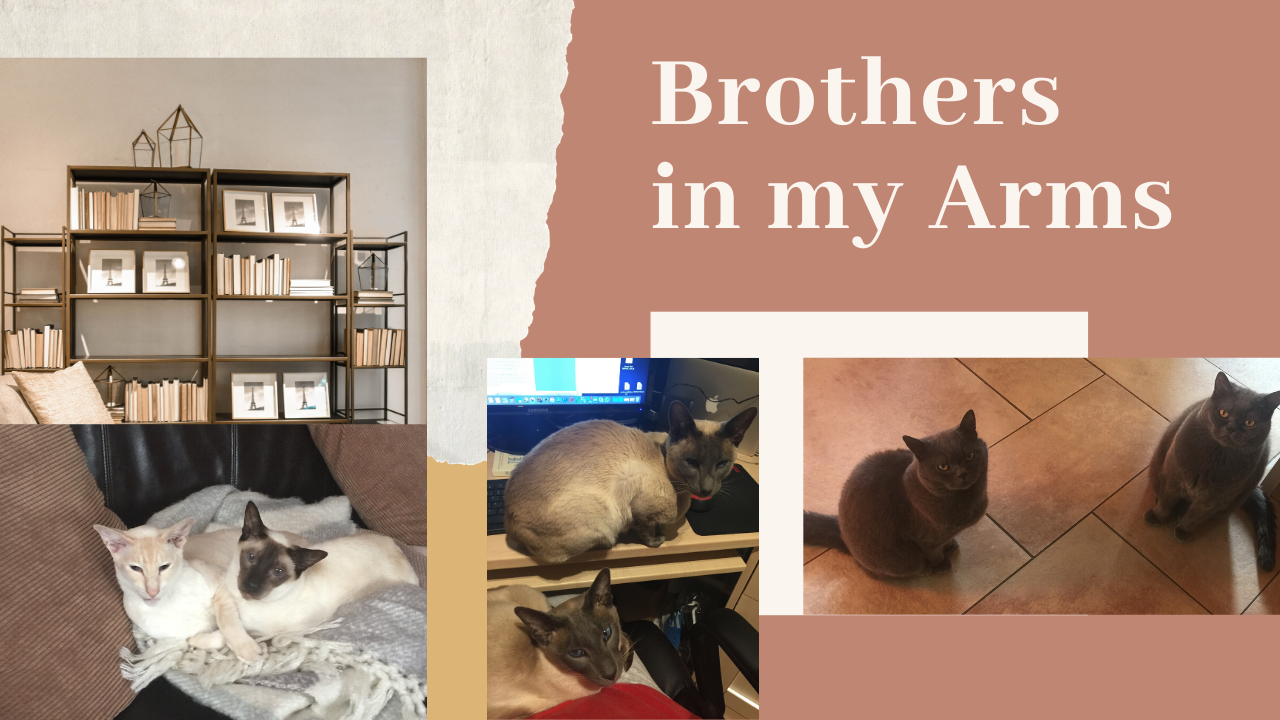 house sitter for two cats uk