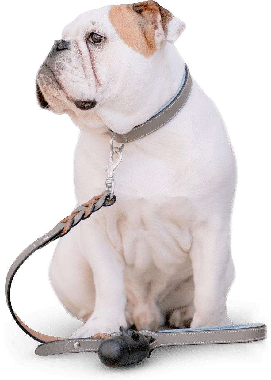 UK pet sitting experiences